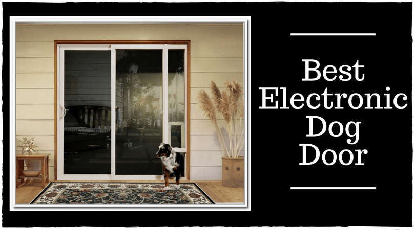Best Electronic Dog Door Top Pet Flaps Reviews Of 2018