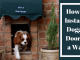 How-to-Install-a-Doggie-Door-in-a-Wall