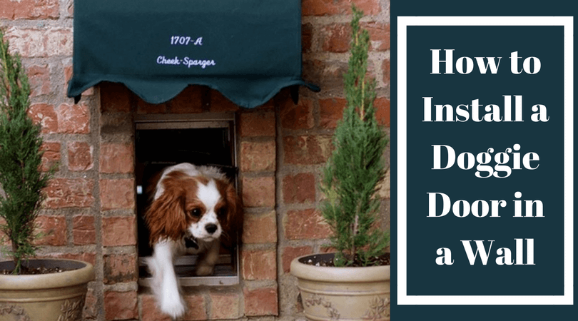 How To Install A Doggie Door In A Wall Know The Best Way