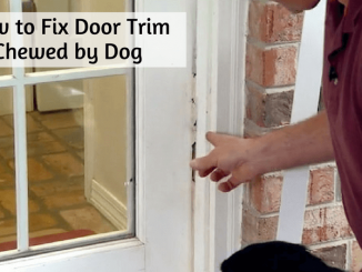 how to fix door trim chewed by dog 1