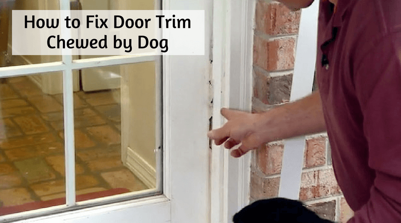 Photo of How to Fix Door Trim Chewed by Dog – Do It yourself