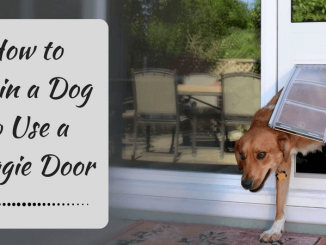 How to Train a Dog to Use a Doggie Door