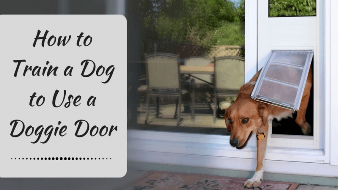 & How to Train a Dog to Use a Doggie Door u2013 Tips and Tricks?
