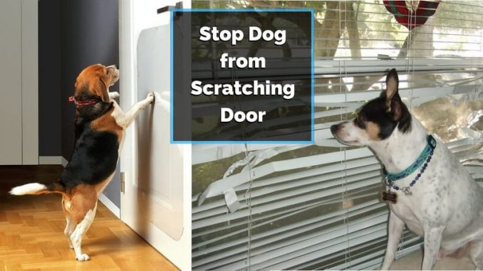prevent dog from scratching door