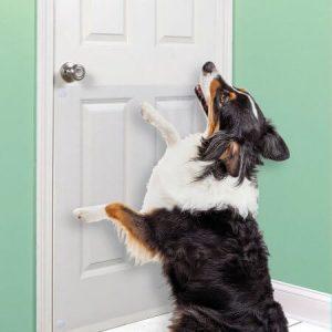 Best Way To Stop Dog Barking At Door