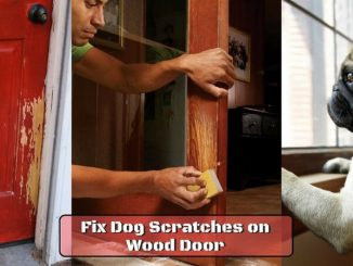 Fix Dog Scratches on Wood Door