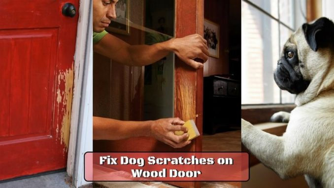 How to Fix Dog Scratches on Wood Door - DIY Repair Guide