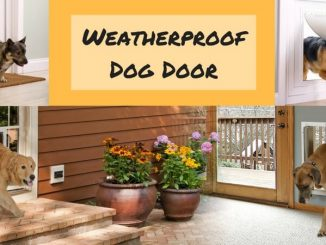 Weatherproof Dog Door