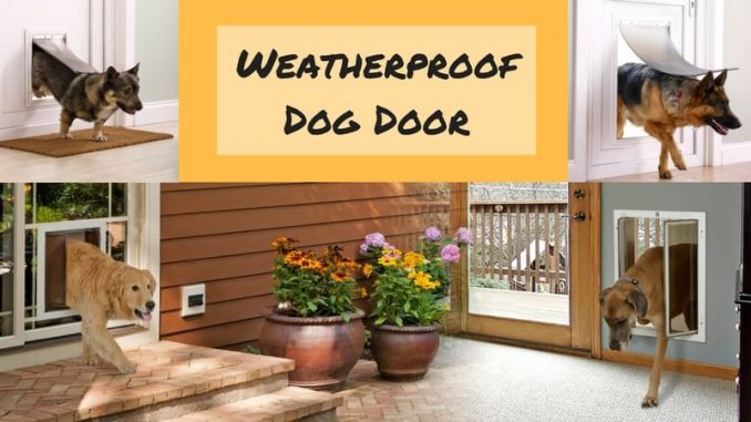 Best Weatherproof Dog Door Buy Weather Seal Doors Now