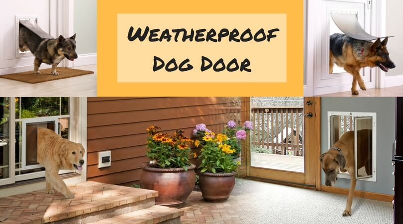 Photo of Best Weatherproof Dog Door | Buy Weather Seal Doors Now!