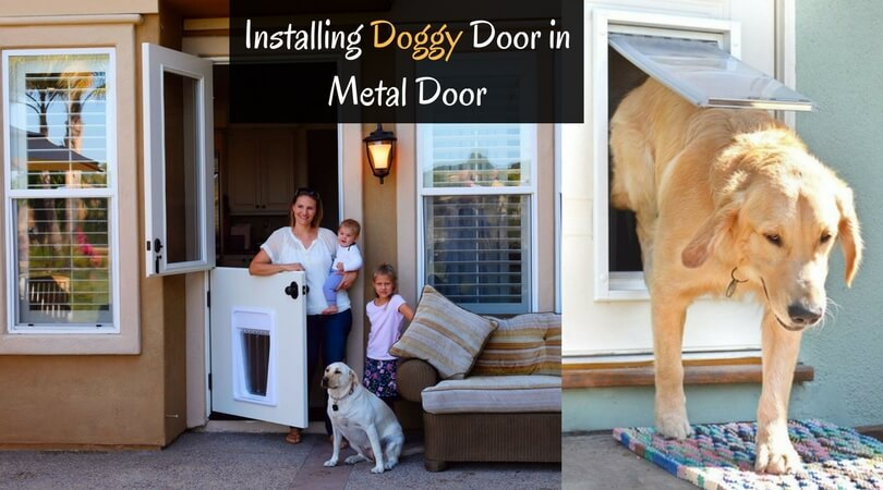 Photo of How to Install a Dog Door in a Metal Door: Try in Your Panel Door