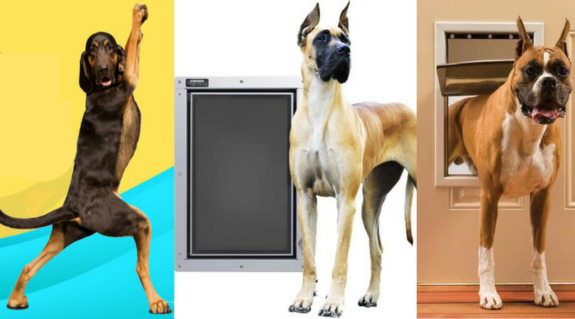 Photo of Best Dog Door for Large Dogs: Top Doors for Extra Height