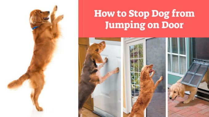 How To Stop Dog From Jumping On Door Top Dog Training Tips