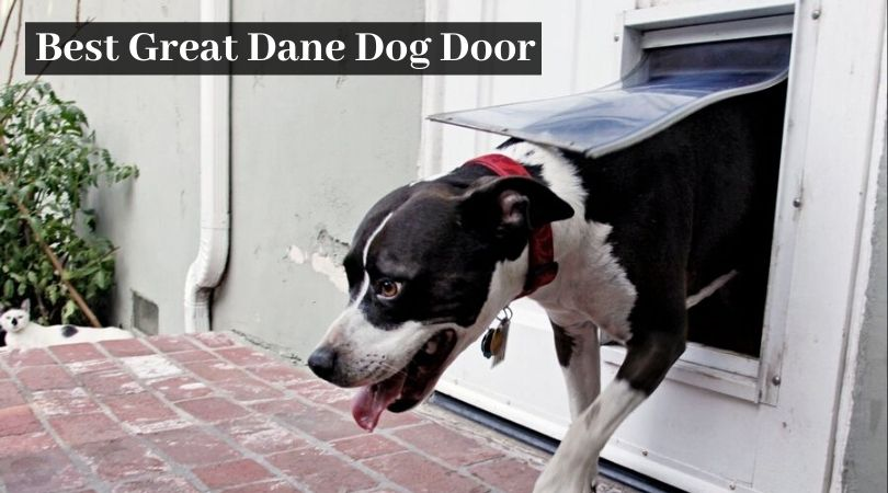 Photo of Best Great Dane Dog Door: Extra Large Doggie Doors