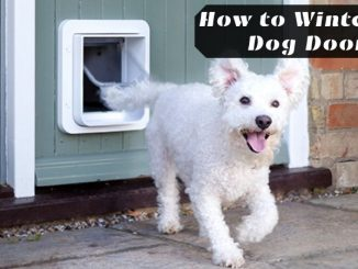 How to Winterize Dog Door