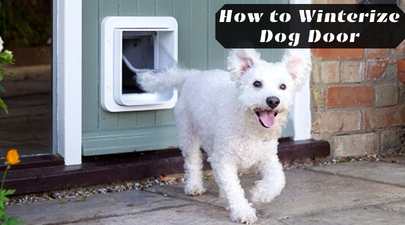 Photo of How to Winterize Dog Door – Seal Your Sliding Glass Door With Dog Door