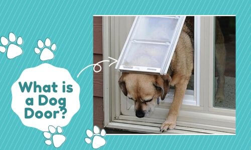 What is a Dog Door